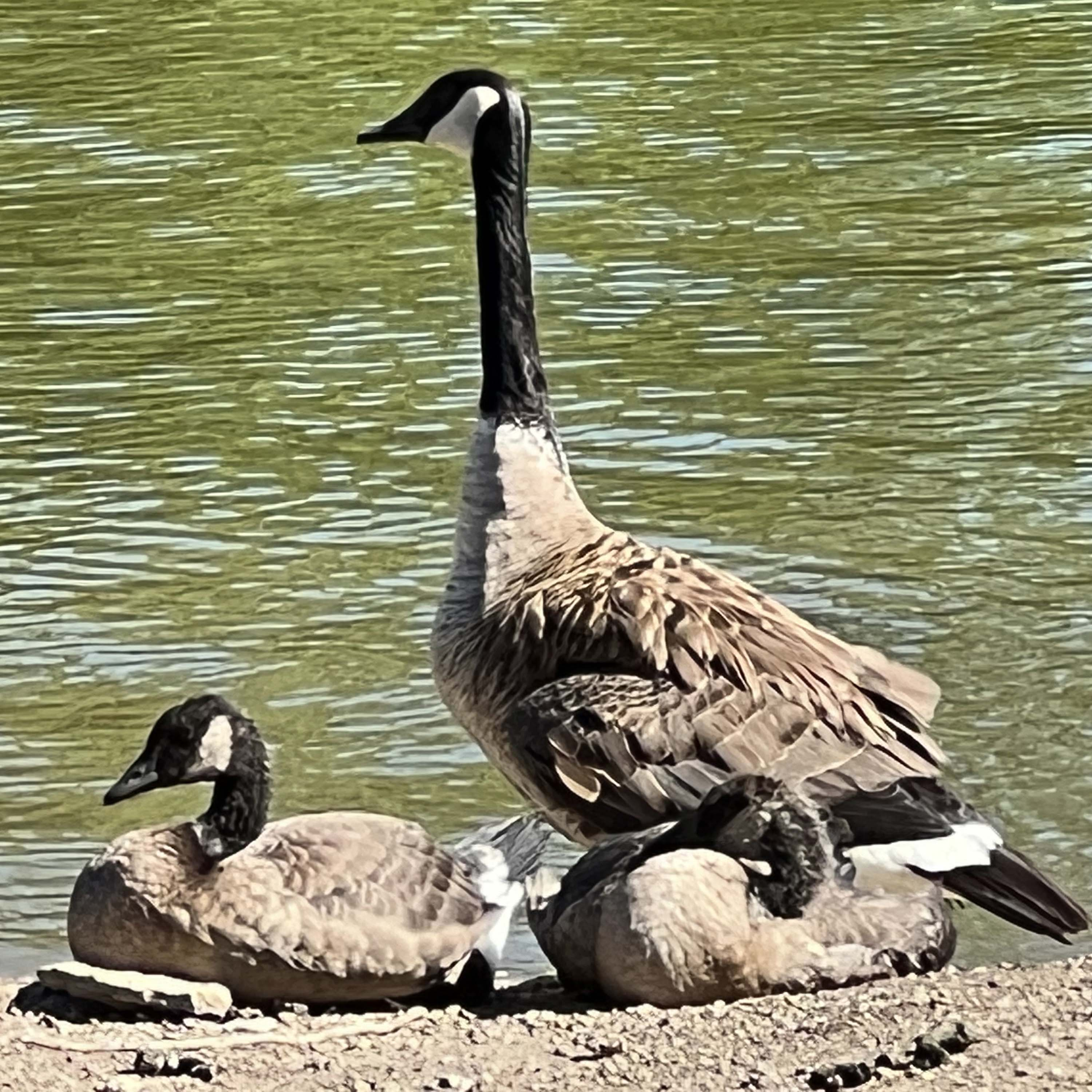 Marion volleyball was on a roll Saturday at its home tournament. The Warriors and Jayden May, spiking the ball, went 3-0 in pool play and rode that momentum all the way to a tournament win.